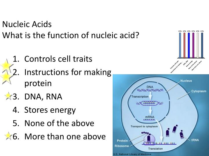 what is a example of nucleic acid