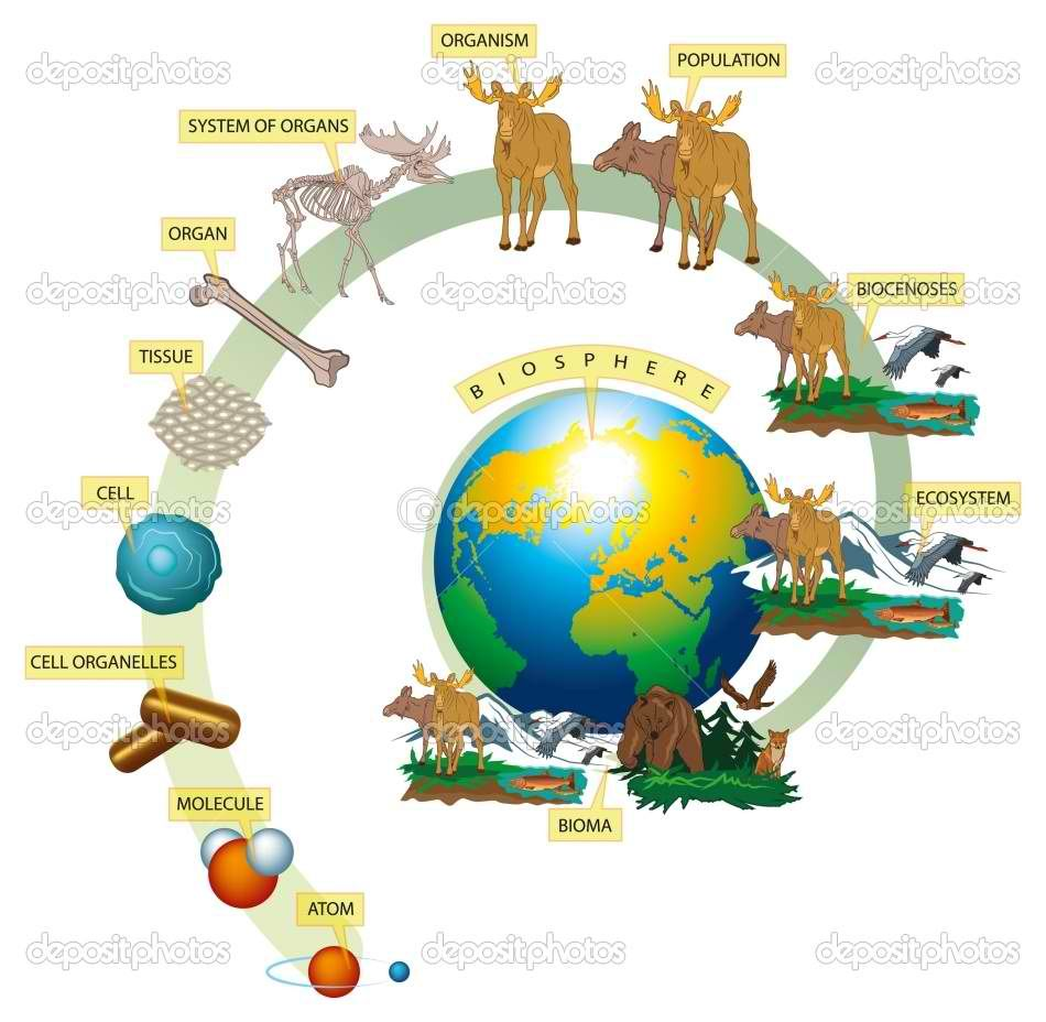 example of a ecosystem in biology