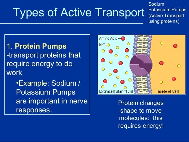 an example of a cell membrane pump